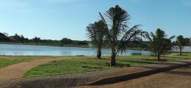 Plantio de coqueiros em torno do lago